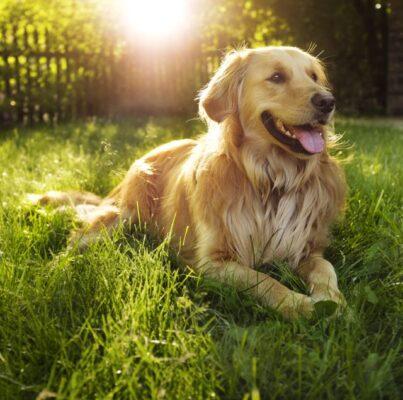 sampoo & contitioner για σκύλους με αλόη